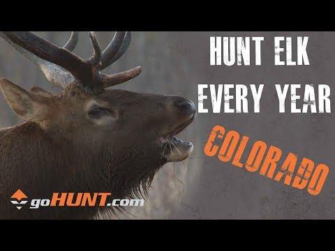 Hunt Elk Every Year: Colorado Elk