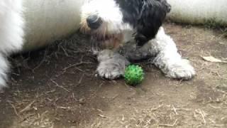 ボール大好きです http://www.wanlove.jp/
