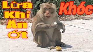 Thử cho khỉ ăn ớt,lừa khỉ ăn ớt ,khỉ hoang dã.Monkey eat chili.Thầy Bảy Miền Tây.