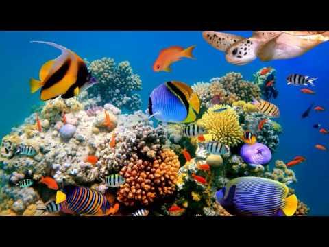 Обои для рабочего стола на тему Коралловый риф