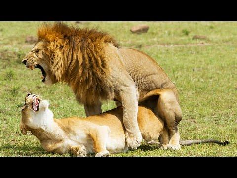 Лев в сексе: общие характеристики