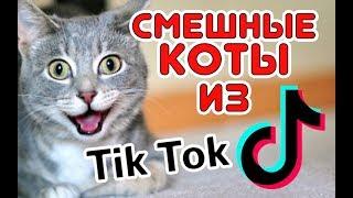 Смешные КОТЫ из Tik Tok / Funny CATS from Tik Tok