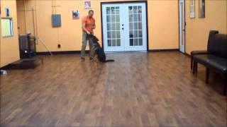 San Antonio Dog Training Co. Baylor