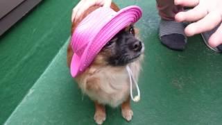 帽子はやはりちょっと、嫌がるみたいです(笑)