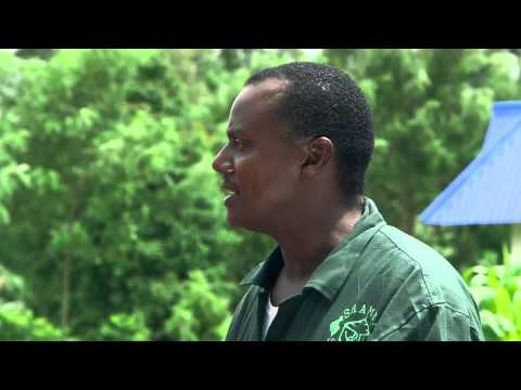Shamba Shape Up Sn 05 - Ep 20 Chicken, Maize, Post Harvest Losses (Swahili)