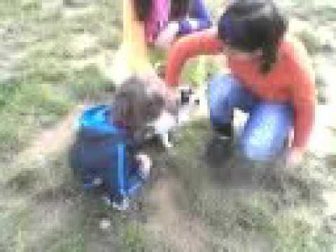 Alvin e il cane