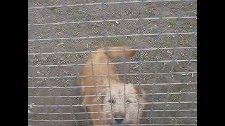 Собака по клички Муха любит ходить на задних лапах!!)))
