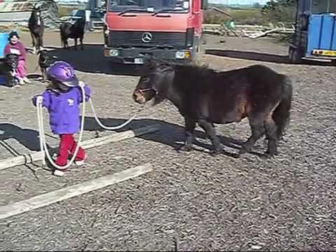 Parelli Natural Horsemanship 3YearOld Student Mirren with her Pony