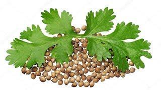 11 Amazing Health Benefits of Coriander Seeds - best health