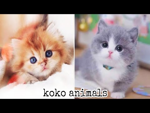 CuTe cat - Cute and Funny Baby Cat and dog Videos Compilation #42 || koko animals