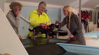 Linse og Mopper tager med Pixie og Jytte til hundesvømning