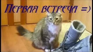 Первая встреча  Злючка Толстун , забавное видео