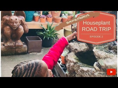 HOUSE PLANT ROAD TRIP: Ep.2- Metropolitan Plant & Flower Exchange | Fort Lee, NJ