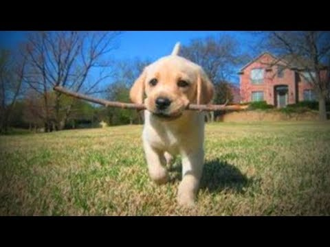 Funny Pets 🐶🐱 Funny and Cute Baby Animals (Full) [Funny Pets]