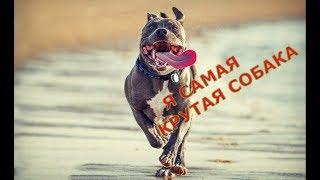 Топ 5 самых быстрых собак в мире , сколько км в час может бежать собака ??? Top 5 Fastest Dogs