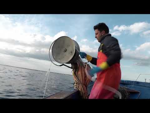 Sostenibilità della pesca e protezione dell'ambiente marino | Sustainability of fisheries and protection of the marine environment - Filmato breve delle attività