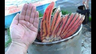 Рыбалка на трофейных щуку в 10 кг, такой рыбалки у меня еще небыло