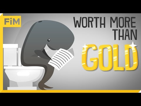 Why Sperm Whale Poop Is Worth More Than Gold