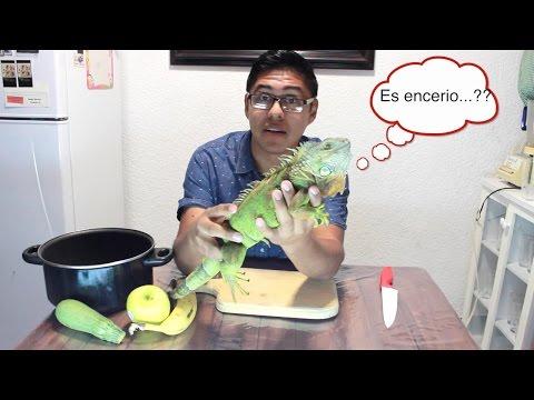 Ensalada para iguana #1 - Blacky Blog ¿QUE COMEN LAS IGUANAS?