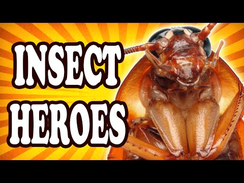 Top 10 Insects with Amazing Superpowers — TopTenzNet