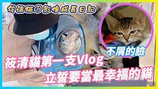 【Qi黃帝】筱清貓第一次出門看世界 以後就讓我帶牠闖天下 | 黃帝の遊戲頻道➤@Qi 黃帝