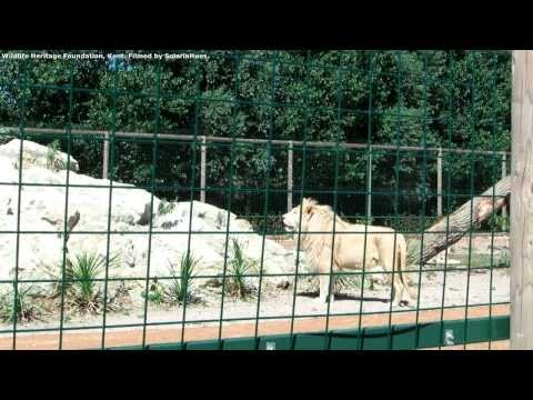 White Lions Part 3 - WHF Open Day 2013