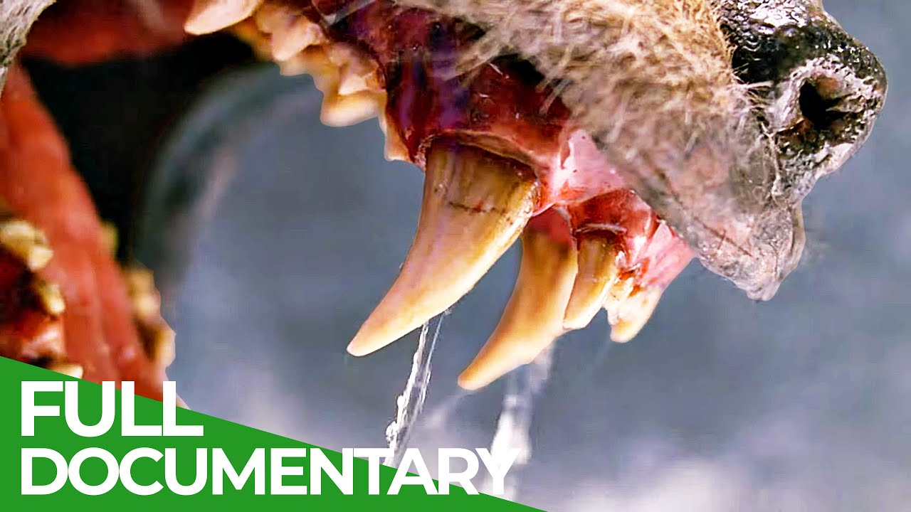 Teeth & Claws | Animal Armory | Episode 1 | Free Documentary Nature