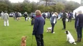 Rosie Winning First Place In Class At Nuneaton Dog Training Club Show