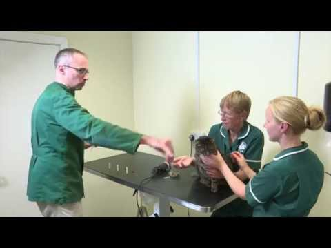 Pet Care Tips- How we obtain a blood sample from a cat