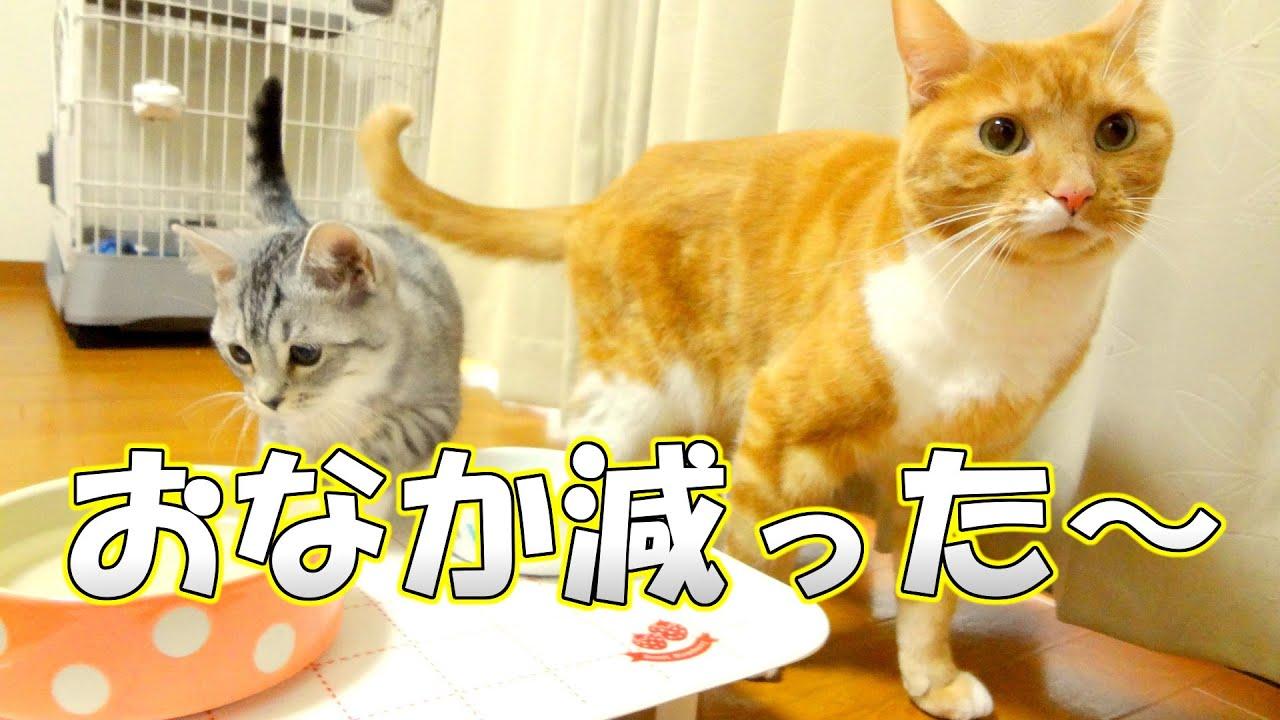 猫ズのお腹減ったアピール - the...