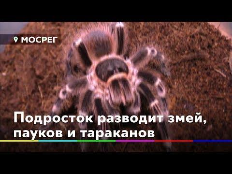 Подросток из Лосино-Петровского разводит дома змей, пауков и тараканов