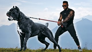 The 10 Most ToughLooking Dog Breeds Ever