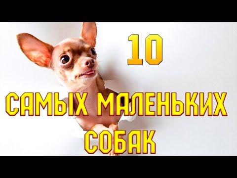 10 самых маленьких собак