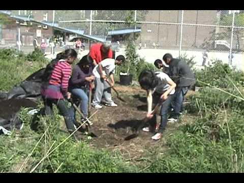 Urban school food gardening in Toronto, Canada