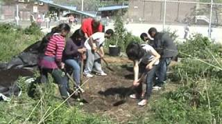 Urban school food gardening in Toronto, Canada