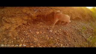 Китти первый раз на природе. Кошка гуляет