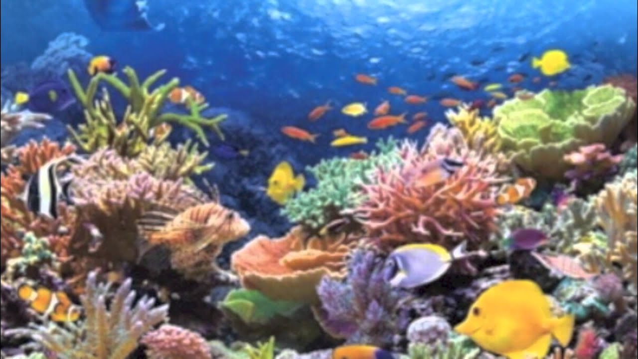 Environmental issues with coral reefs