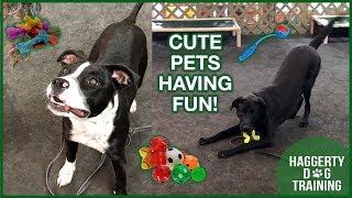 PETS HAVING FUN!