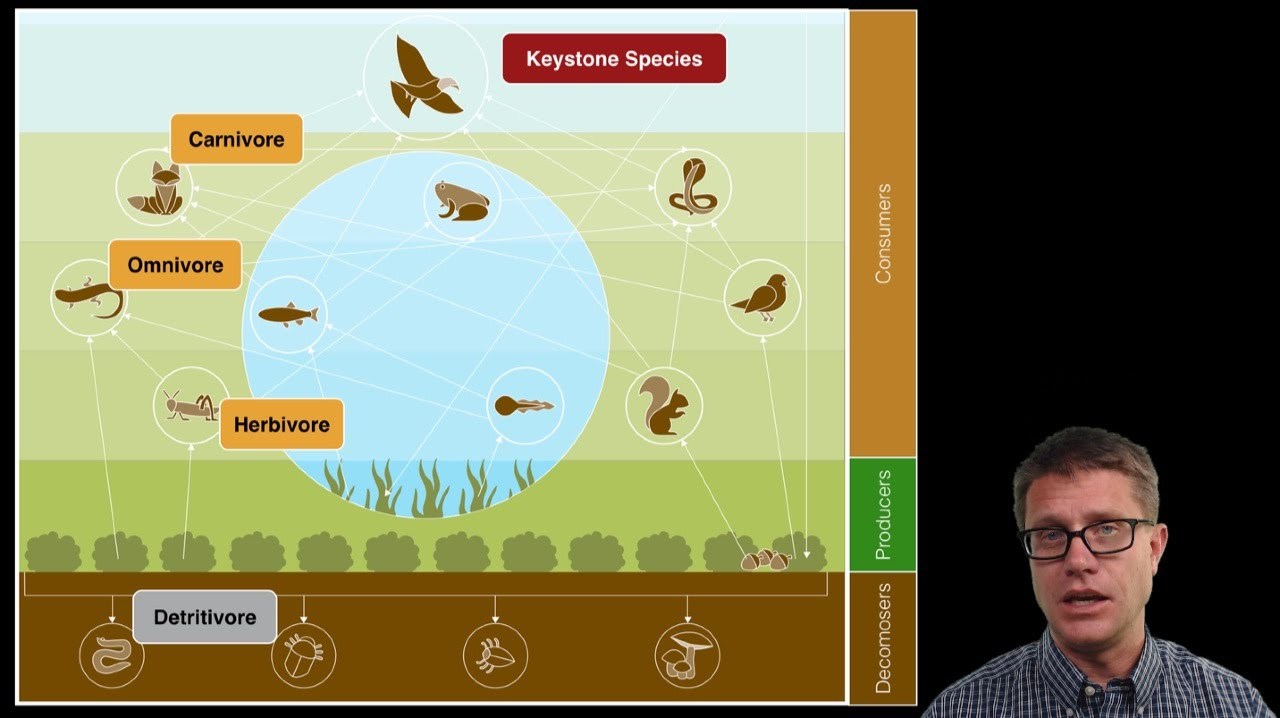 hight resolution of ecosystem ecology