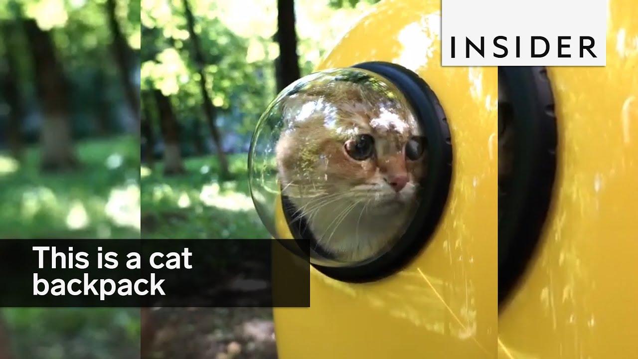 Get Cat In Cat Carrier
