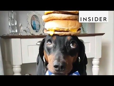 Kevin & Liz - Harlso the balancing hound