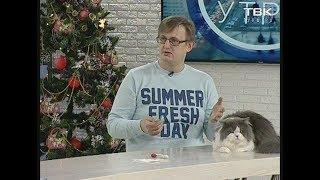 Чистка зубов кошек и собак