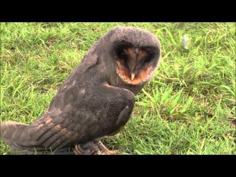 Roofvogel en uilen beurs Spijkenisse