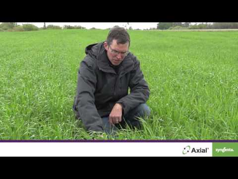 See How Axial Delivers Powerful And Flexible Weed Control