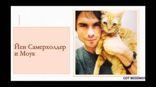 Смешное видео с котами - КОТЫ ЗНАМЕНИТОСТЕЙ &  КОТЫ ЗВЕЗД