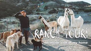 Cesar Millan's Animal Paradise in LA | Ranch Tour!