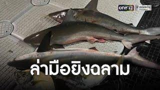 เร่งหาตัวหนุ่มยิงฉลาม โพสต์ภาพเย้ยกม. | ข่าวเย็นช่องวัน | ข่าวช่องวัน