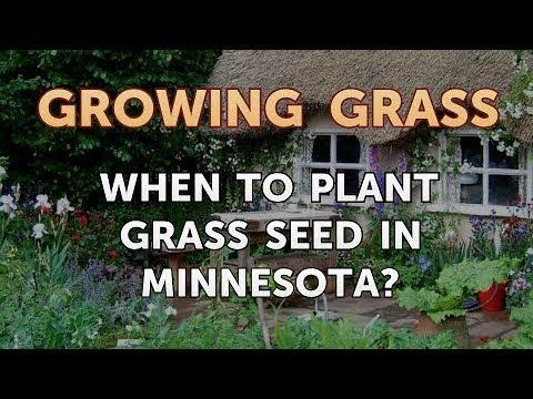 Best way to grow grass in minnesota landscape