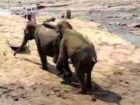 Fillerin çiftleşmesi Youtube