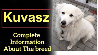 Kuvasz  Pros and Cons, Price, How to choose, Facts, Care, History